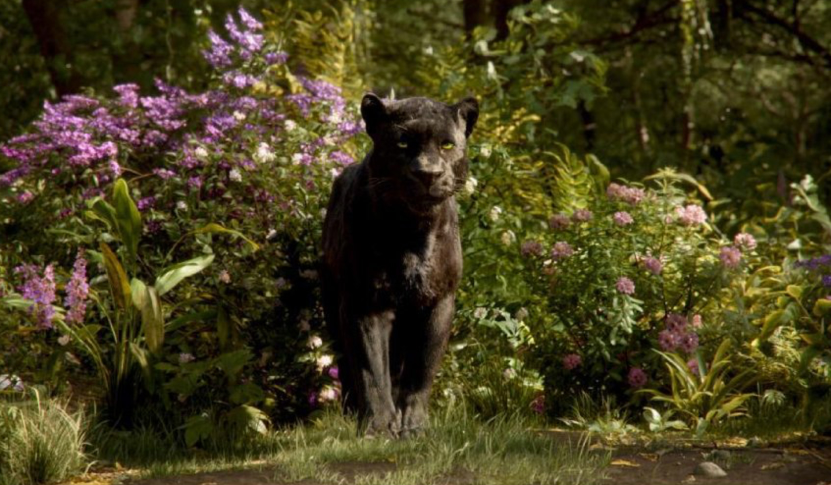 the-jungle-book-still-2